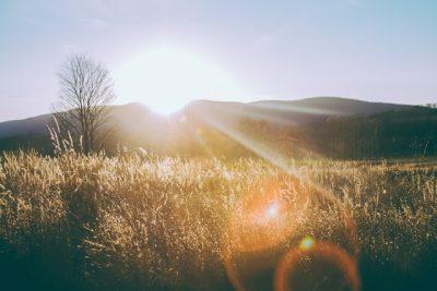 夕日を浴びる草原
