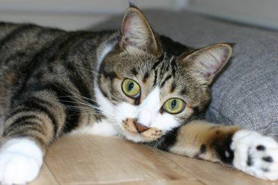ネタバレなし:楳図かずお「猫目小僧」はハードボイルド妖怪マンガ!