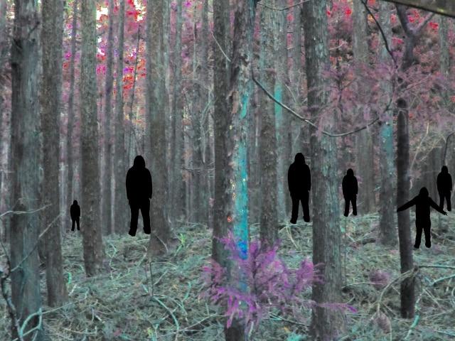 森の中の人影