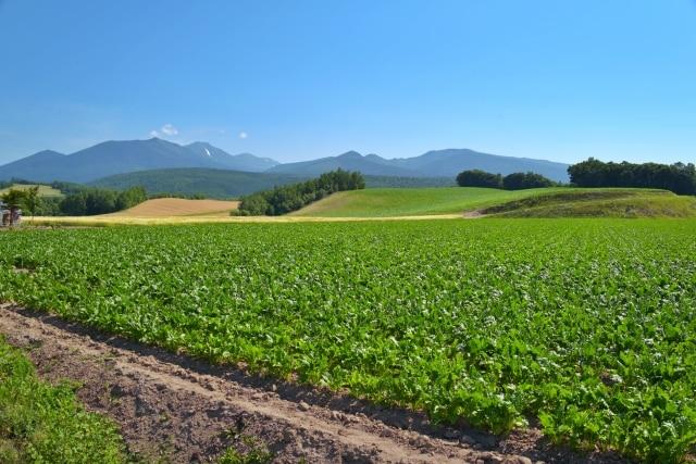 緑色の畑の風景